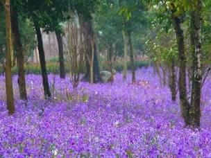 台州的这些花 你叫的出名字吗