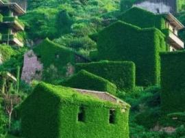 """浙江被遗忘的孤岛渔村 美成现实版""""绿野仙踪"""""""
