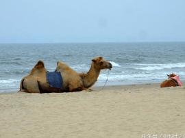 中国第一长滩,湛江东海岛旅游日记