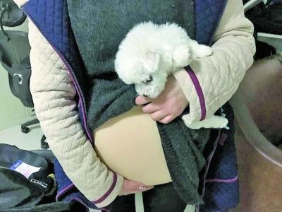 图为女孩从硅胶假肚子里拿出小狗