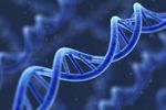 """人类基因组编写计划转向设计""""超安全""""细胞"""