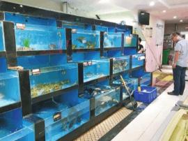 郑州小龙虾价格暴涨至50元/斤 食客直呼吃不起