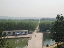 """山西襄汾六大林业工程夯实""""绿色襄汾""""生态底色"""