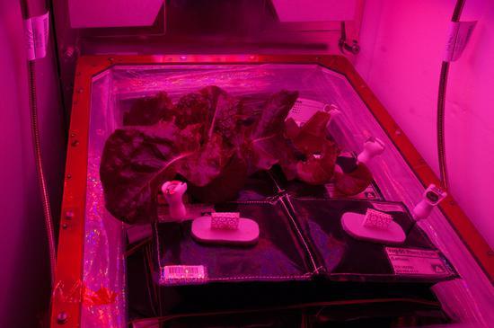 在太空中种植蔬菜不是梦 空间站宇航员们正在尝试