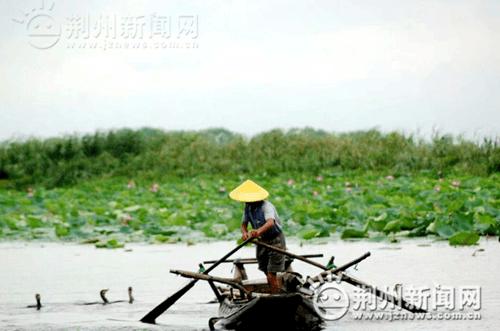 2017全国网络媒体荆州行走进洪湖 体验全域旅游