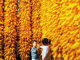 喜报:2017年长治市粮食产量再获丰收