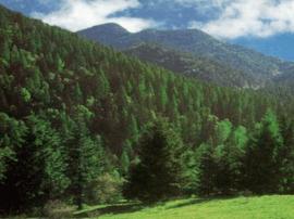 临猗县环保局联手县林业局核查自然保护区