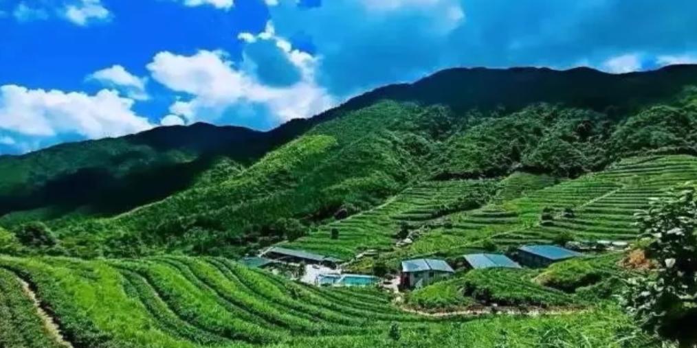 800米海拔上看云海泡茶汤泉,清远这个地方太赞了