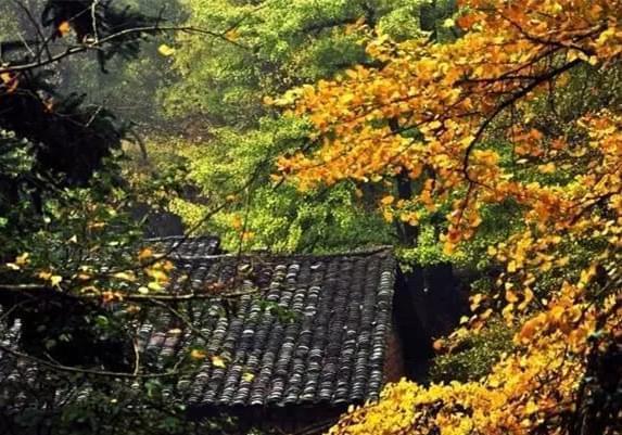 追寻秋之色彩 这个地方让广东的秋天如此惊艳
