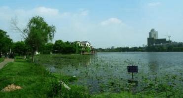 荆州市人大常委会监利县开展水污染防治法执法检查