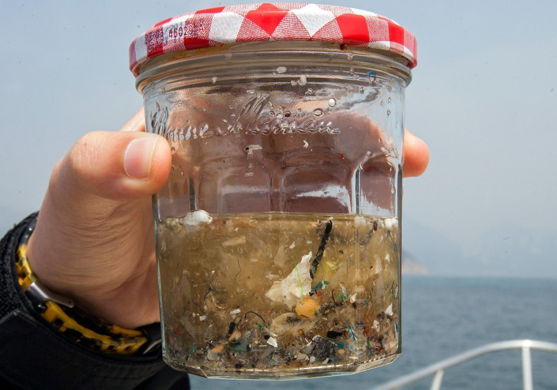 """鱼吃塑料-人吃鱼 绕了一圈人类""""自食其果""""?"""