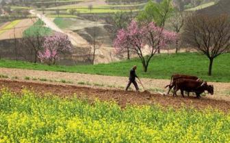 春耕备耕季伊犁农资市场呈现一片繁忙景象