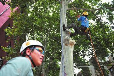 西北大学开设攀树课:女生比男生选的多