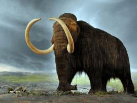 中国海关查获大批猛犸象牙 常被当普通象牙出售