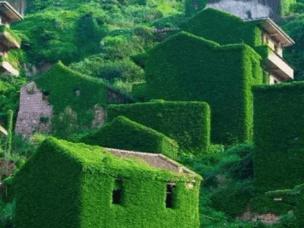 中国有一个小岛,被遗弃了20年,却美成了天堂