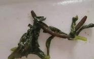 靖江小伙公司食堂吃出蚯蚓 网友称补大了