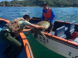 惠州官兵救受伤百岁海龟 背上有字