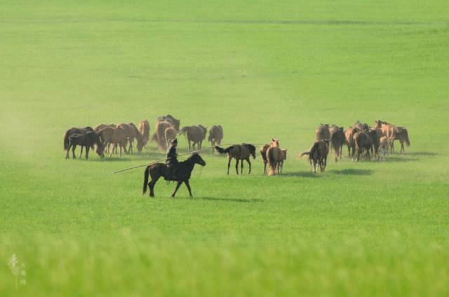 人人都听过的牧草王国 跟着当地牧民玩鲜少人知的小众