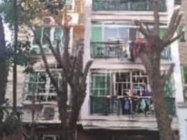"""湖南一业主嫌绿化树遮了2楼采光 将树剃""""光头"""""""