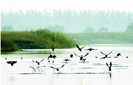 """还湖于民,悦享生活——""""水清岸绿""""成为现实"""