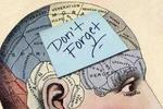 大脑储存记忆准确位置获得新证据