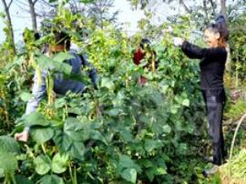 郴州启动蔬菜应急储备调控预案 确保市城区正常供应