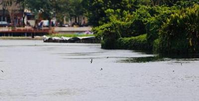 群燕飞舞三月春 东西湖迎来好风光