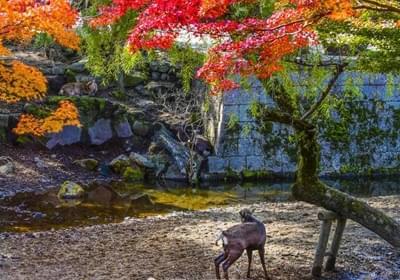 漫步在日本红叶公园