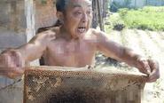 邻居喷洒农药治虫 殃及养蜂户损失惨重