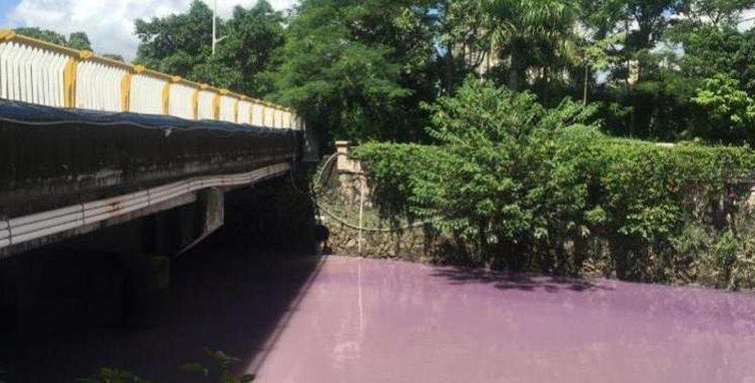 惊人!广州市区一河涌呈粉紫色 疑是偷排污染物
