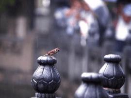 """济南旅行:敢称""""天下第一""""的趵突泉凭何冠名第一"""