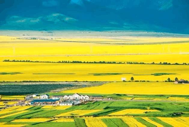 从天空俯瞰青海万亩油菜花田 一组美图惊艳全国