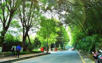走遍韶关市区,发现了几条美到爆的公路