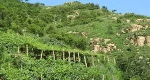 昌黎葡萄沟的旖旎风光