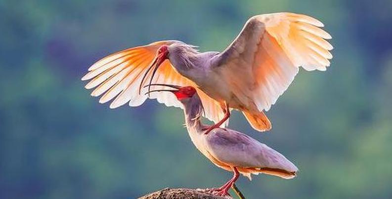 爱鸟台州——山海水城佳、飞鸟相与还!