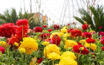 天颐湖泰山花海美成仙境了 让我们来个赏花之约吧!