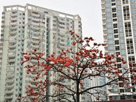 十二城启动住房租赁试点 利好人口流向大都市