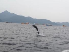 海豚逗留大鹏海域逾10小时 深圳将迎一场海豚大拯救?