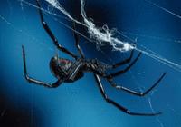 蜘蛛倒时差靠重置生物钟?并未产生不良影响