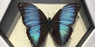 蝴蝶王国之约