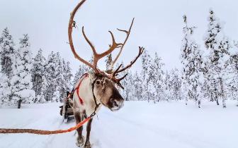 迄今只有两万人去过的北极 原来被那么多人误解了