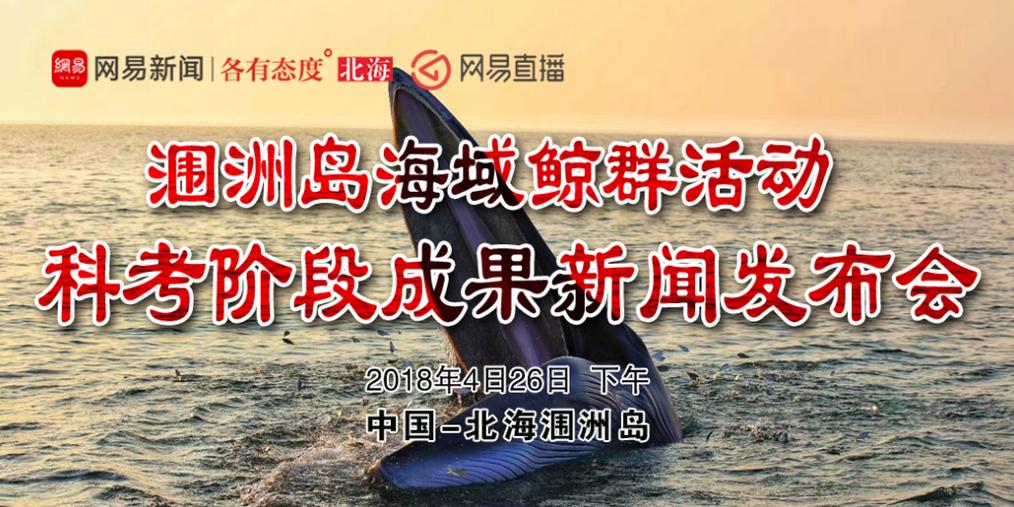 与鲸鱼更亲密 北海涠洲岛鲸群生活大公开