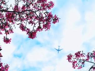 你好,我想带你感受下广州的秋冬大片:粉红花海!
