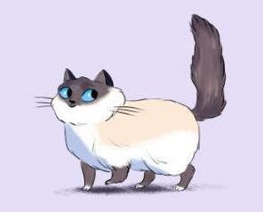 猫喜欢竖起尾巴是什么意思?养猫必备知识