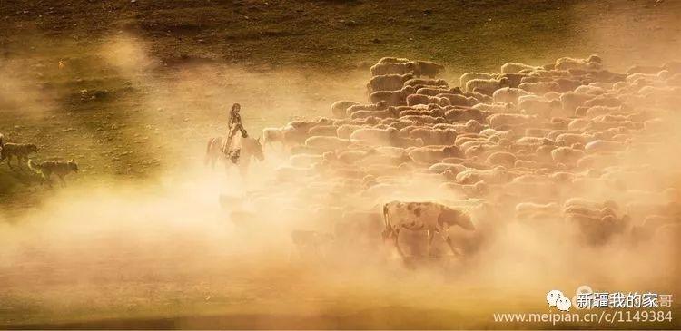 新疆的春天有一种迁徙 场面浩大堪比大片!