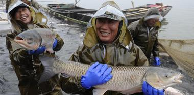 渔民捕19公斤重头鱼拍出40万天价