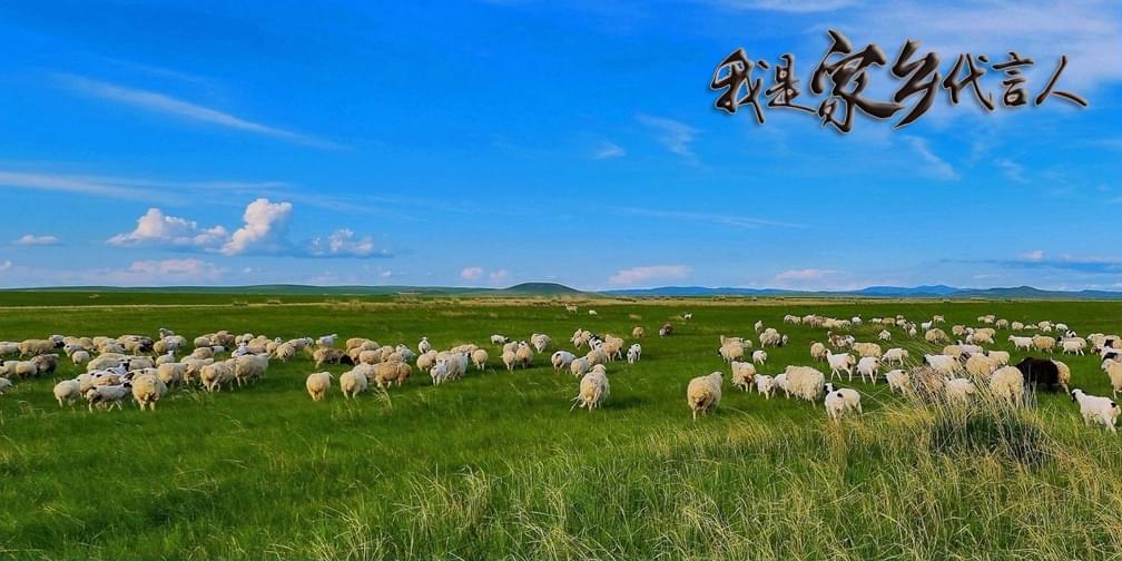 滩羊遇上中草药,让你拥有最幸福的味蕾