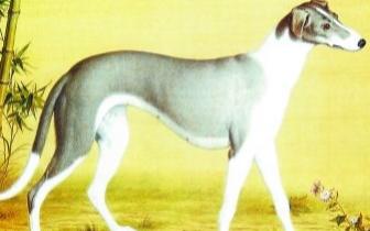 吠其不仁——画家笔下的爱犬神态