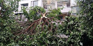 成都狂风暴雨来袭 树被拦腰吹断窗被吹破