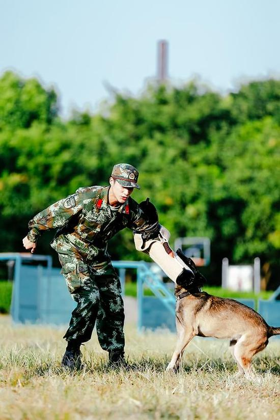 《奇兵神犬》扑咬训练 张馨予自告奋勇被群犬围攻